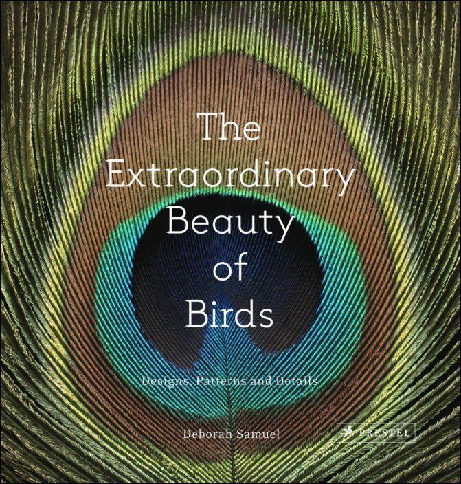The Extraordinary Beauty of Birds